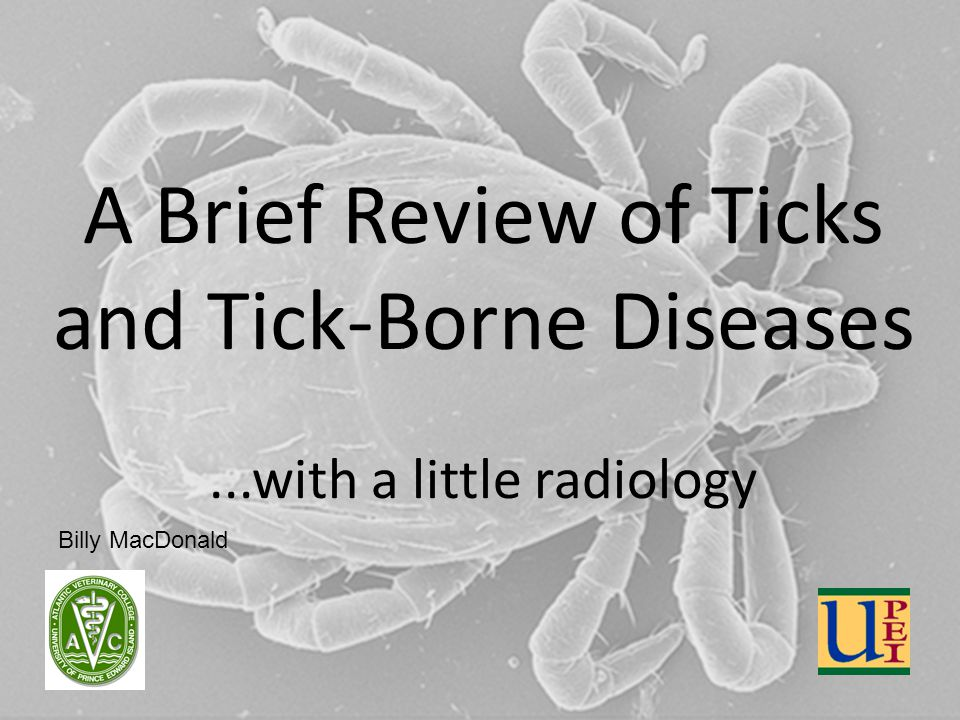 A Brief Review of Ticks and Tick-Borne Diseases