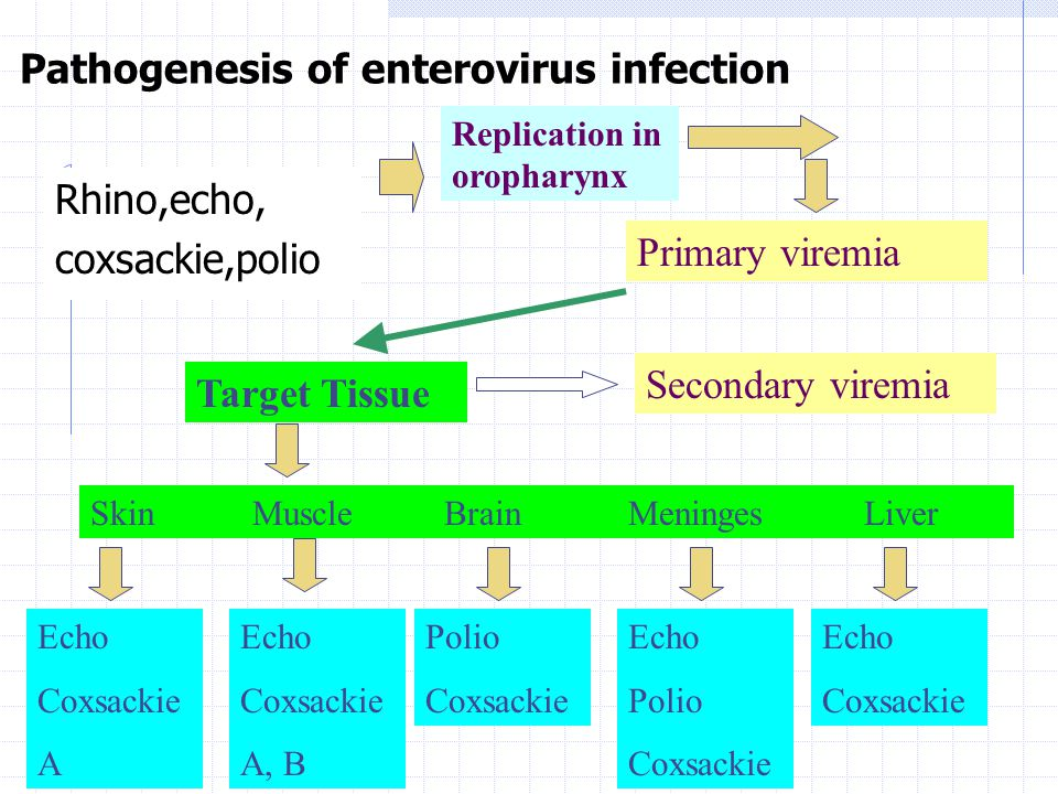 Pathogenesis of enterovirus infection