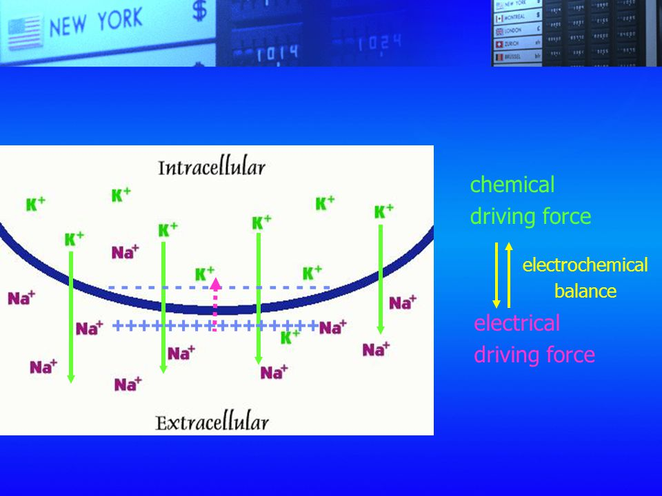 electrochemical balance