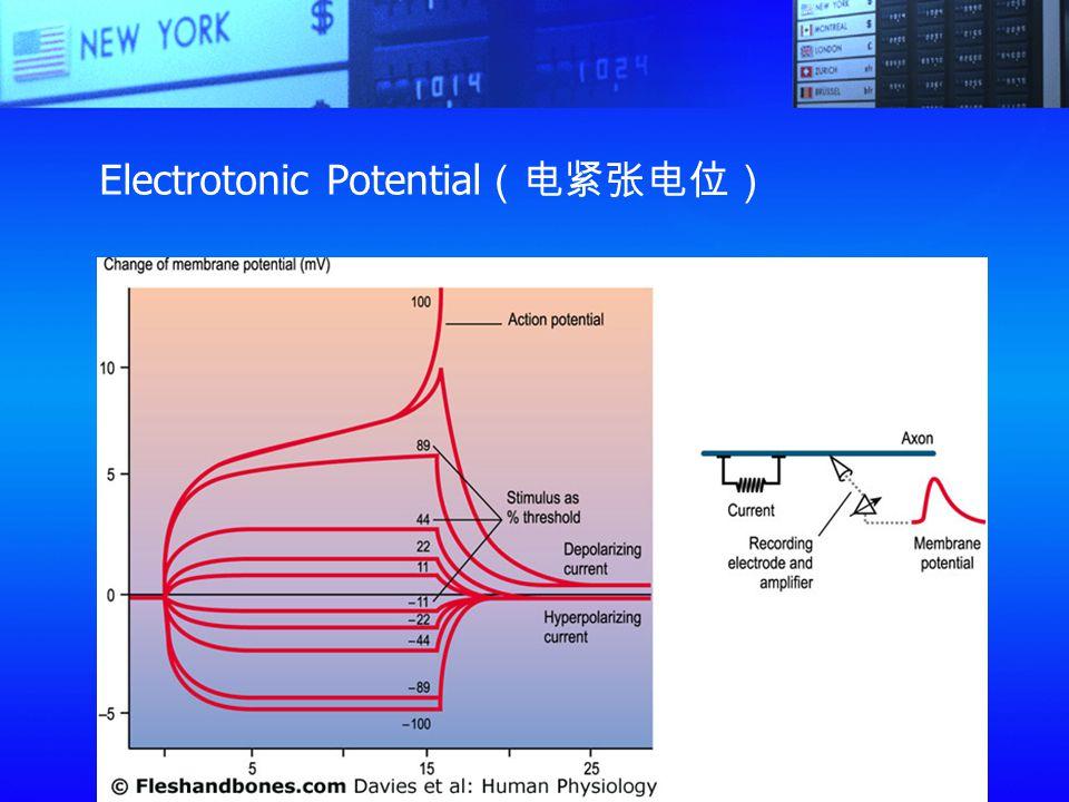 Electrotonic Potential(电紧张电位)