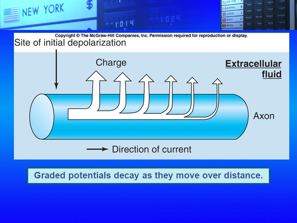 Graded potentials decay as they move over distance.