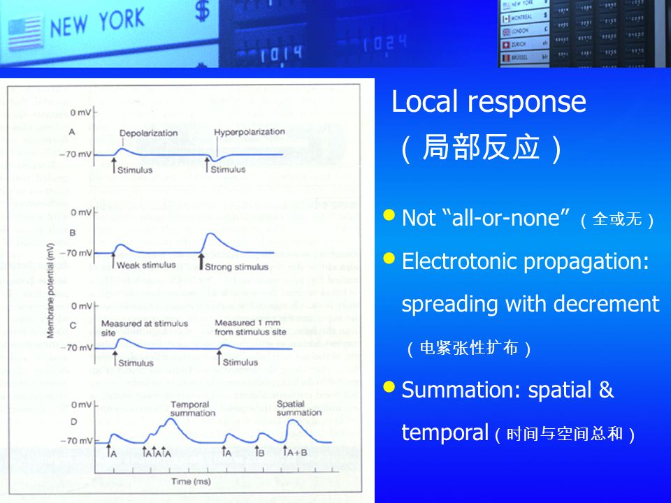 Local response(局部反应) Not all-or-none (全或无)