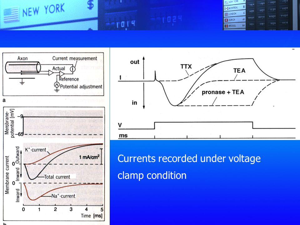 Currents recorded under voltage clamp condition