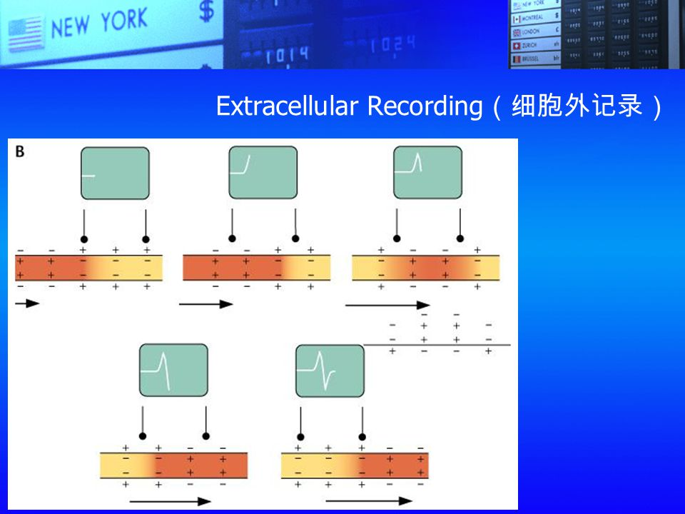Extracellular Recording(细胞外记录)