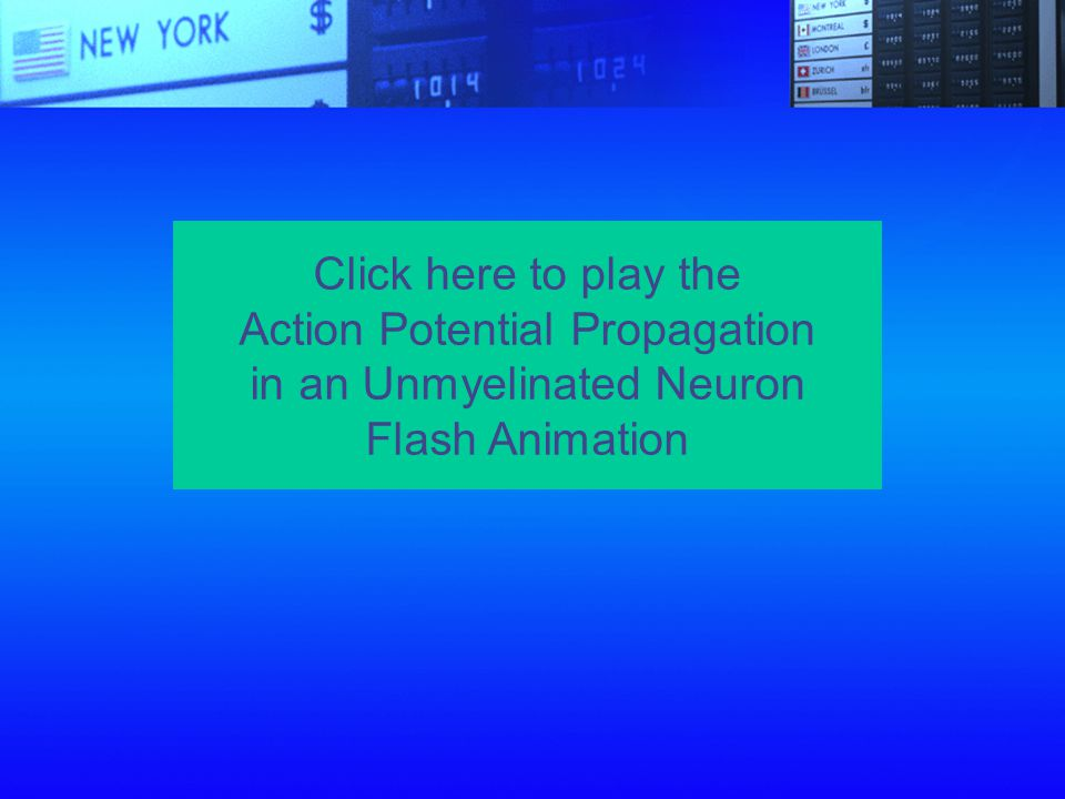 Action Potential Propagation in an Unmyelinated Neuron Flash Animation