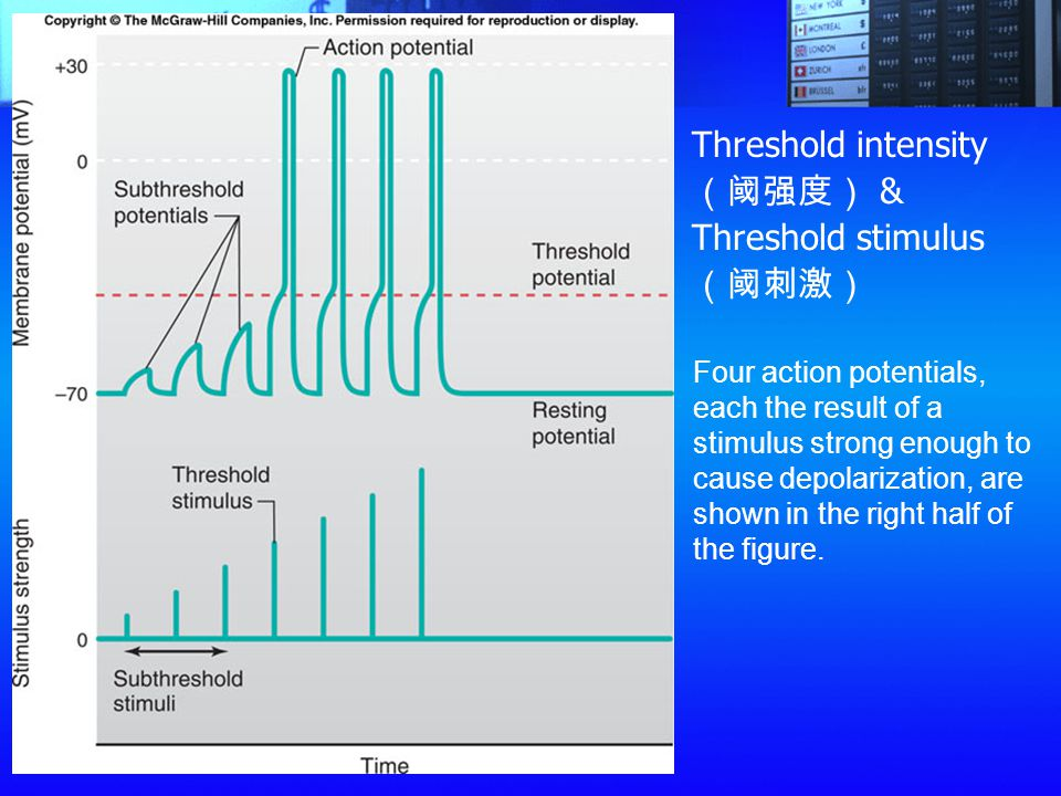 Threshold intensity(阈强度) & Threshold stimulus(阈刺激)