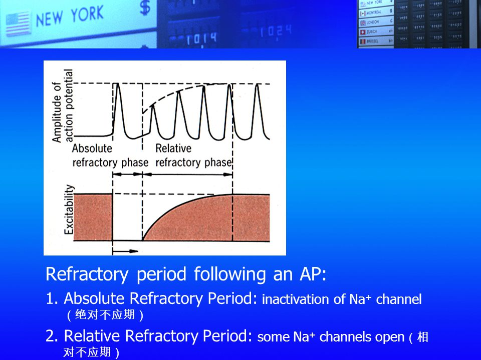 Refractory period following an AP:
