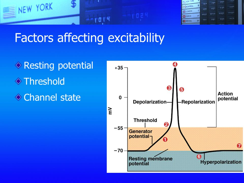 Factors affecting excitability