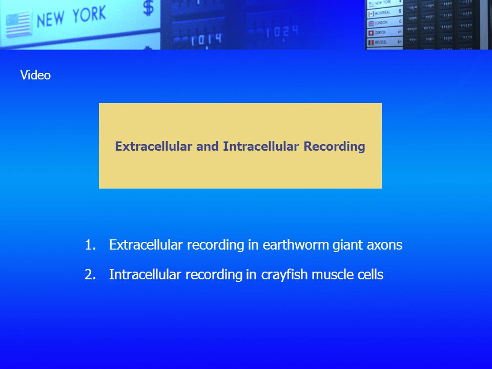Extracellular and Intracellular Recording