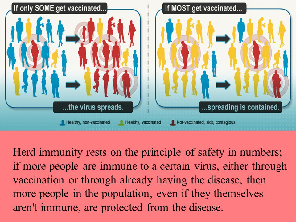 Herd immunity rests on the principle of safety in numbers; if more people are immune to a certain virus, either through vaccination or through already having the disease, then more people in the population, even if they themselves aren t immune, are protected from the disease.