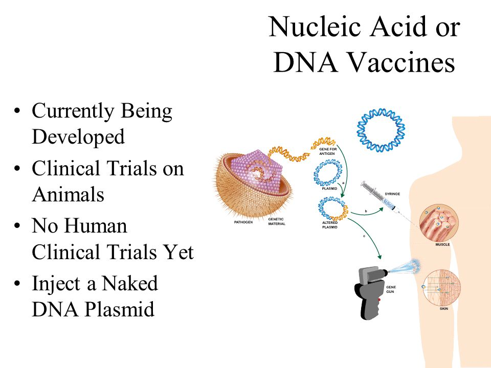 Nucleic Acid or DNA Vaccines