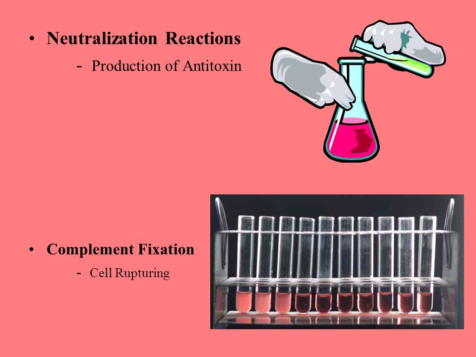 Neutralization Reactions - Production of Antitoxin