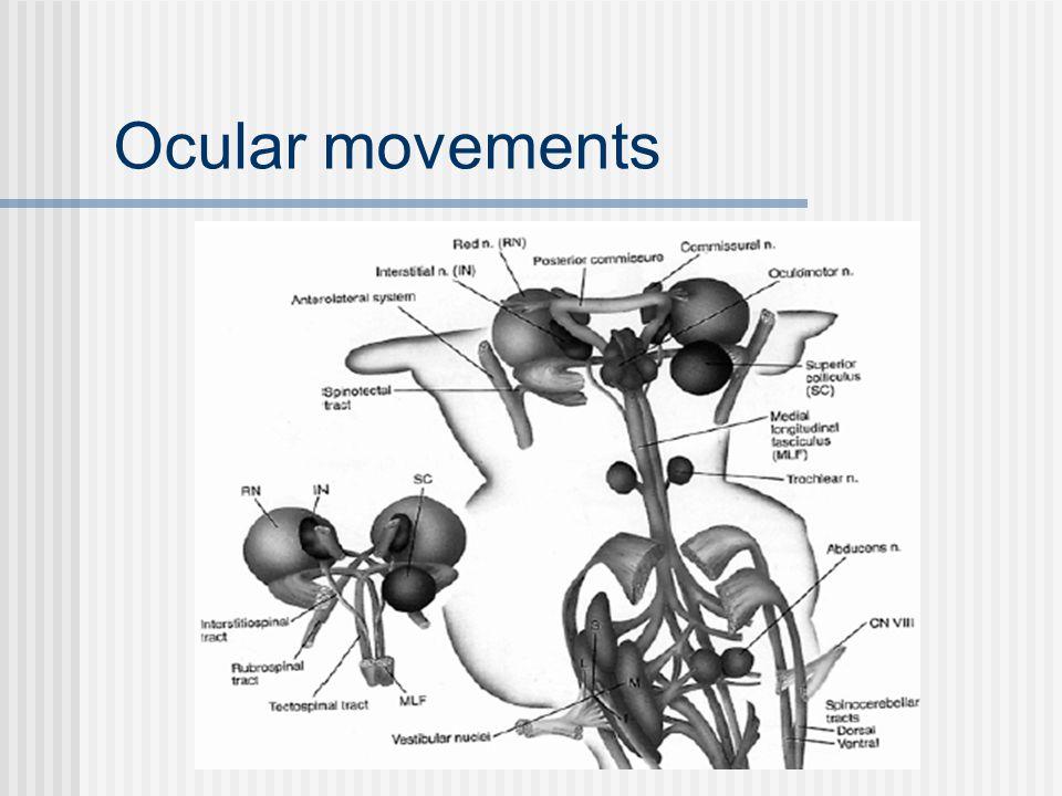 Ocular movements