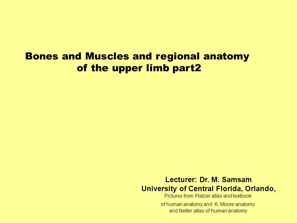 Bones and Muscles and regional anatomy of the upper limb part2