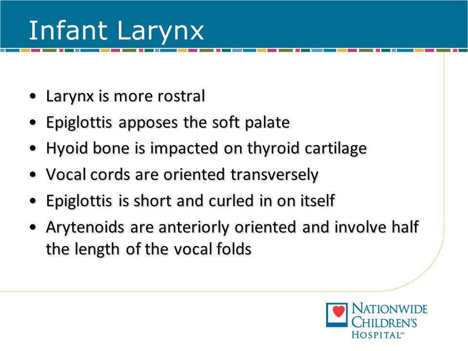 Infant Larynx Larynx is more rostral