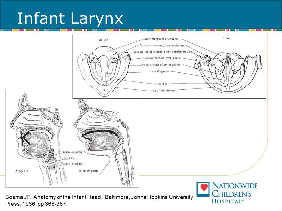 Infant Larynx Bosma JF. Anatomy of the Infant Head.