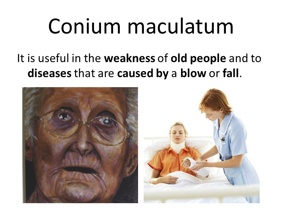 Conium maculatum It is useful in the weakness of old people and to diseases that are caused by a blow or fall.
