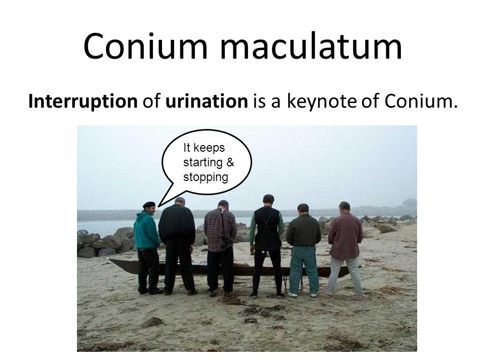 Conium maculatum Interruption of urination is a keynote of Conium.