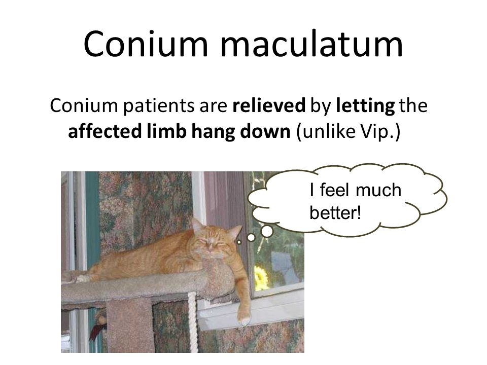 Conium maculatum Conium patients are relieved by letting the affected limb hang down (unlike Vip.) I feel much better!