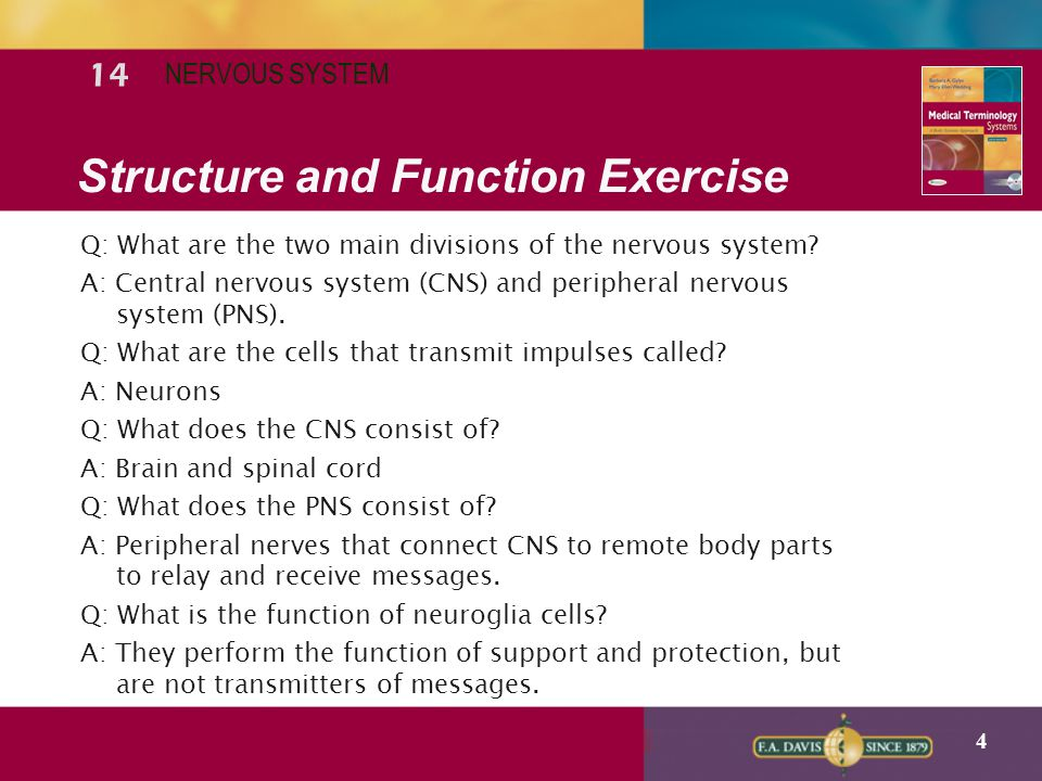 Structure and Function Exercise