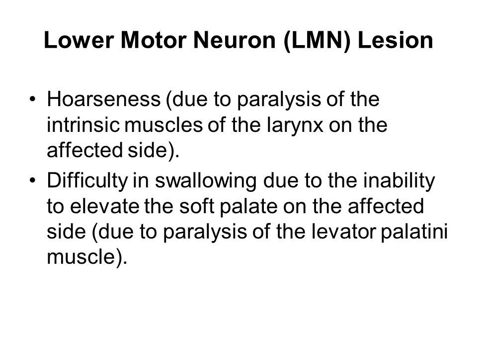 Lower Motor Neuron (LMN) Lesion