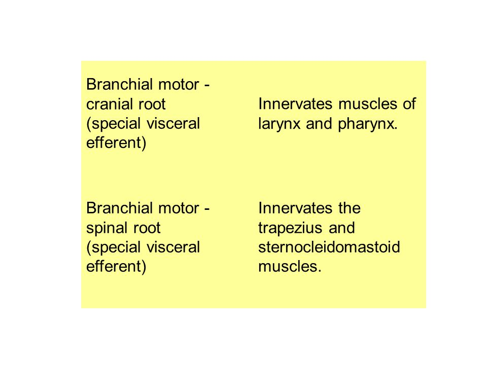 Branchial motor - cranial root (special visceral efferent)