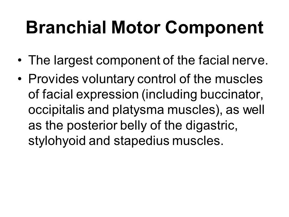 Branchial Motor Component