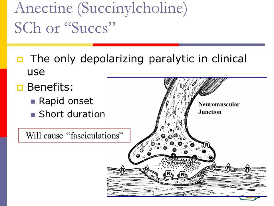 Anectine (Succinylcholine) SCh or Succs