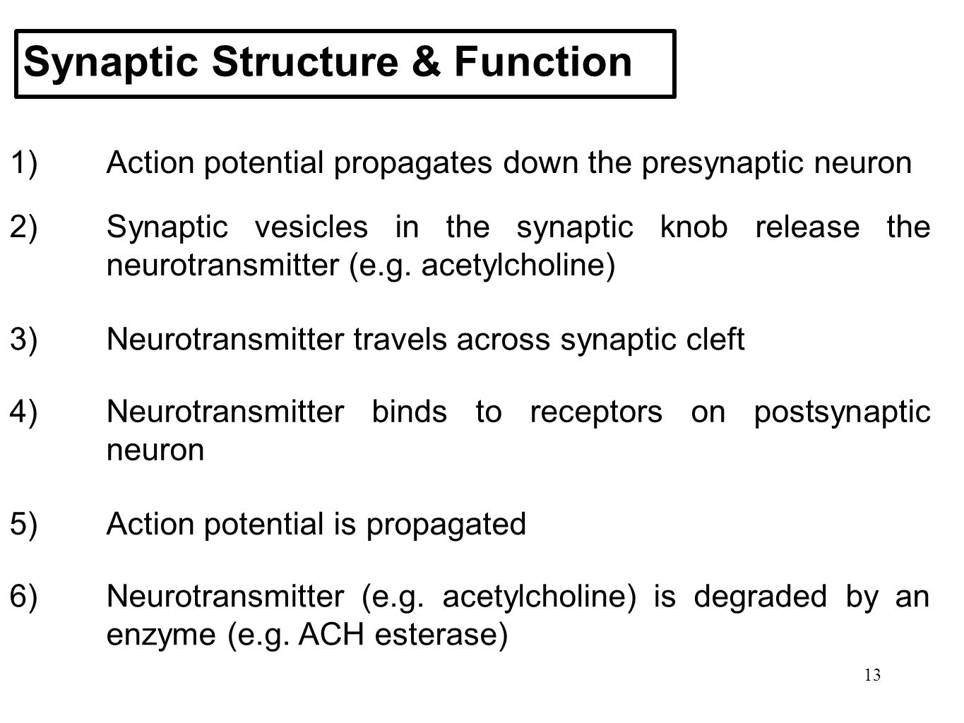 Synaptic Structure & Function
