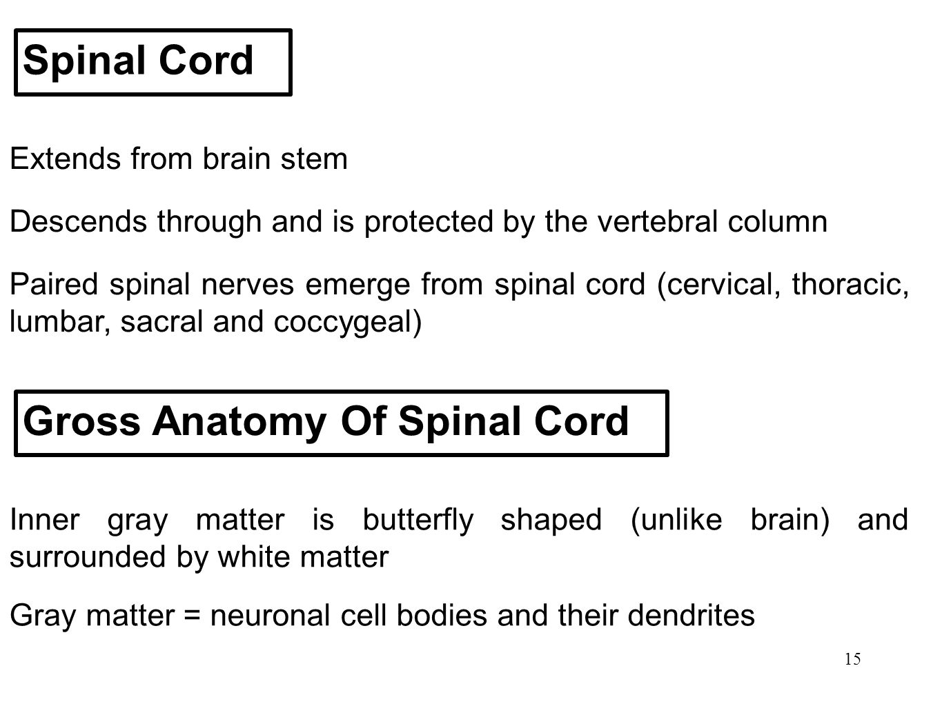 Gross Anatomy Of Spinal Cord
