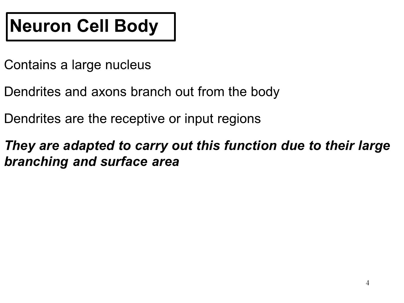 Neuron Cell Body Contains a large nucleus