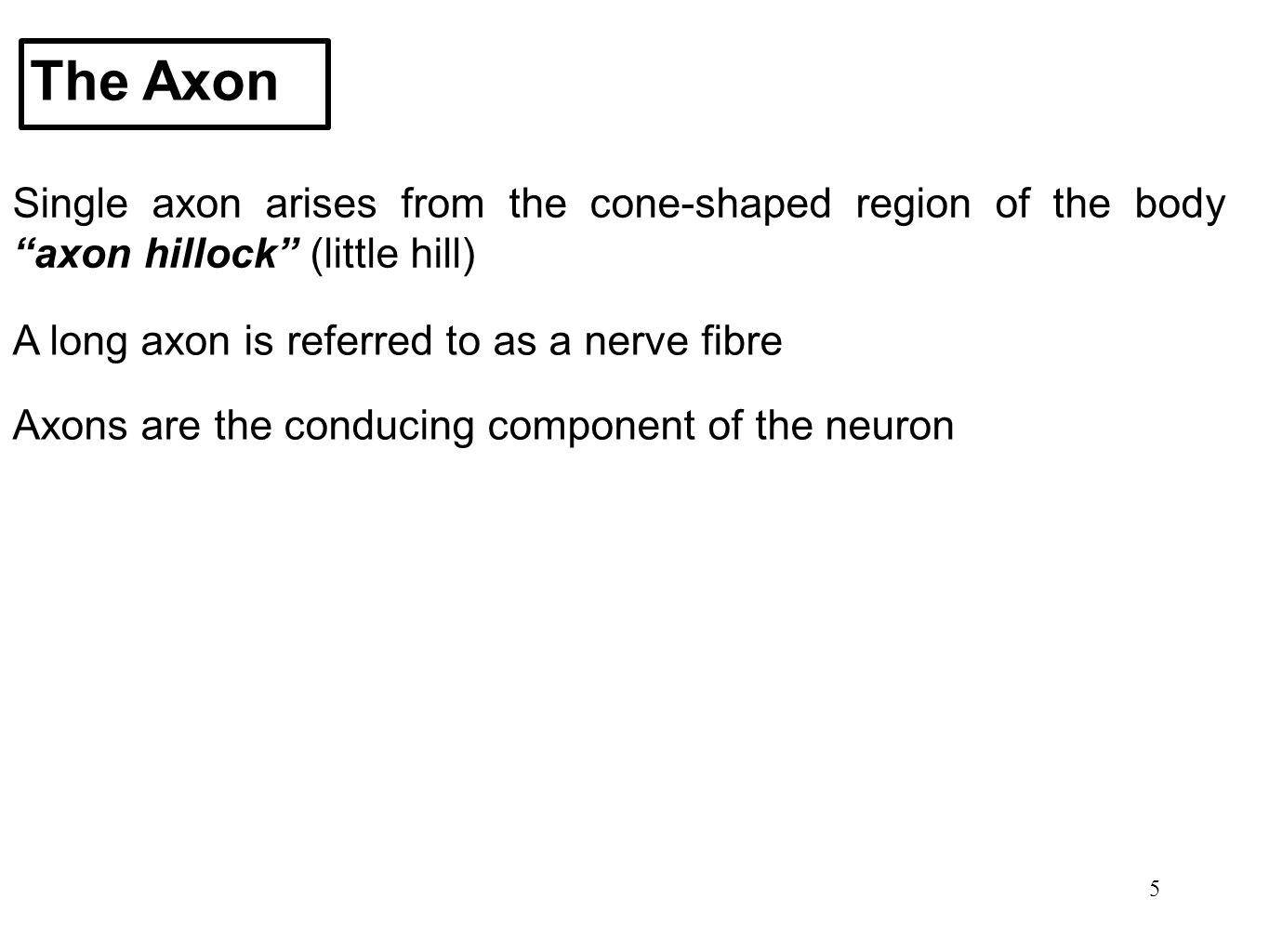 The Axon Single axon arises from the cone-shaped region of the body axon hillock (little hill) A long axon is referred to as a nerve fibre.