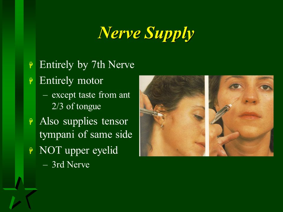 Nerve Supply Entirely by 7th Nerve Entirely motor