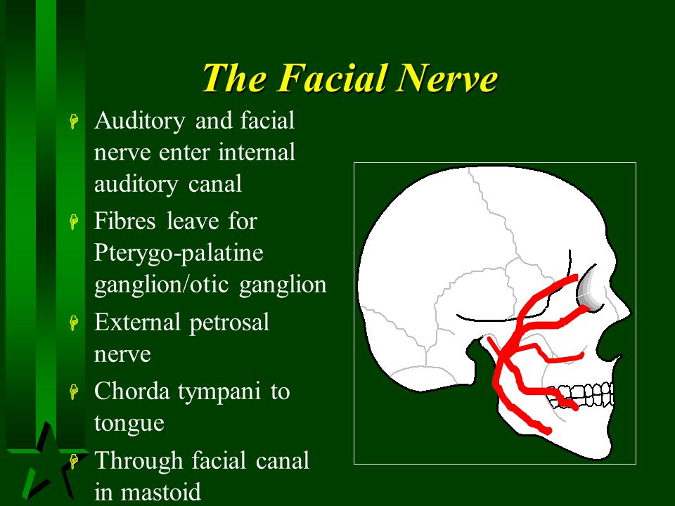 The Facial Nerve Auditory and facial nerve enter internal auditory canal. Fibres leave for Pterygo-palatine ganglion/otic ganglion.