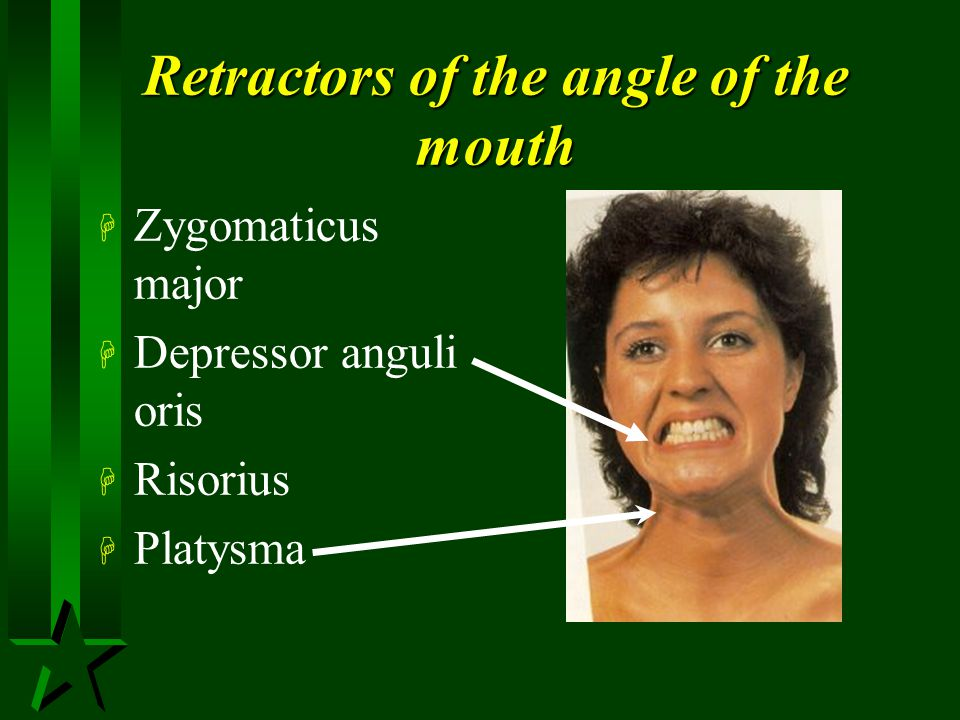Retractors of the angle of the mouth
