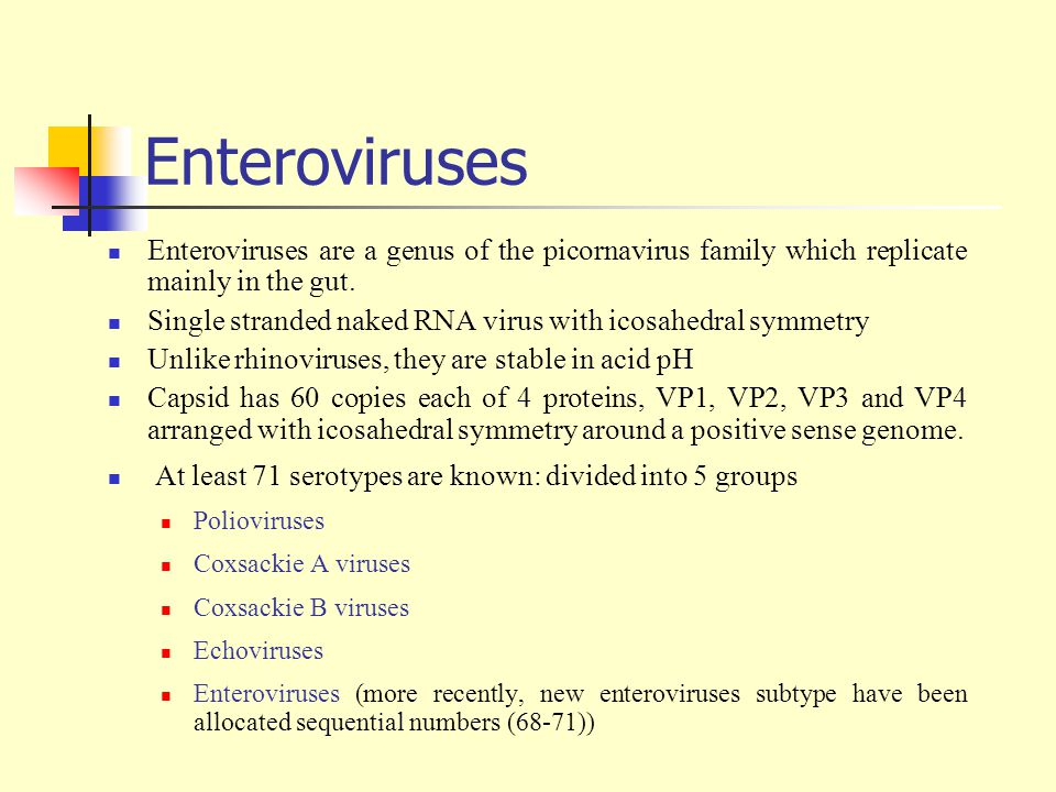 Enteroviruses Enteroviruses are a genus of the picornavirus family which replicate mainly in the gut.