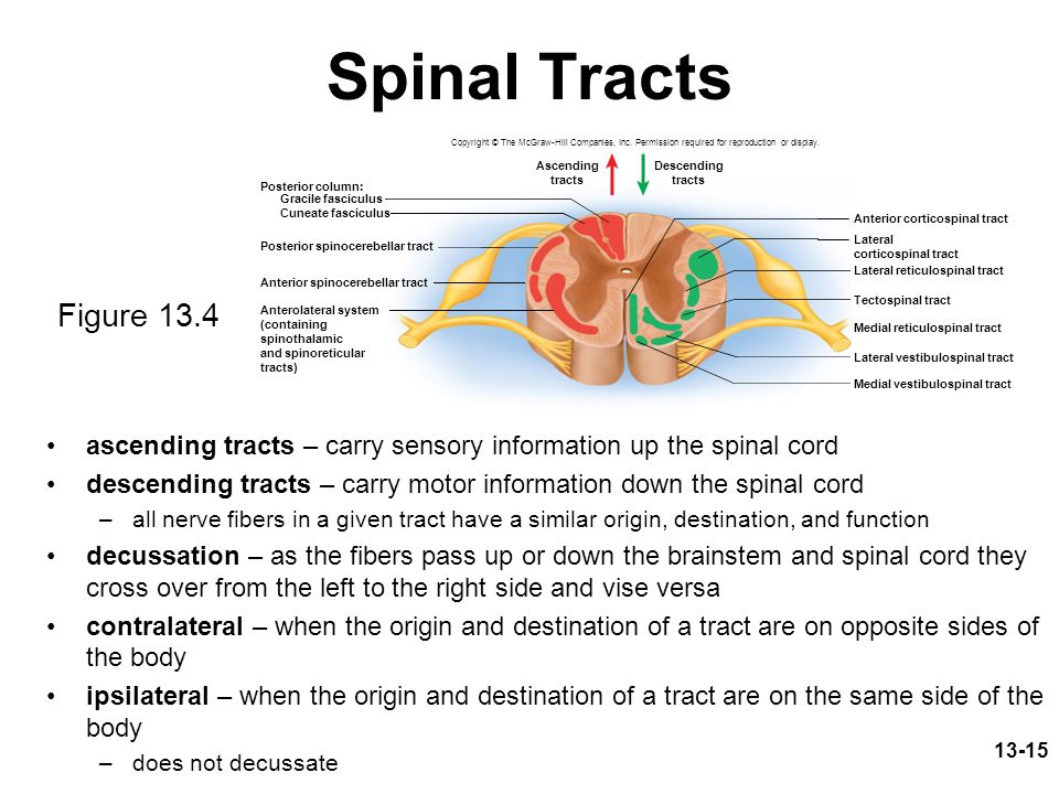 Spinal Tracts Copyright © The McGraw-Hill Companies, Inc. Permission required for reproduction or display.