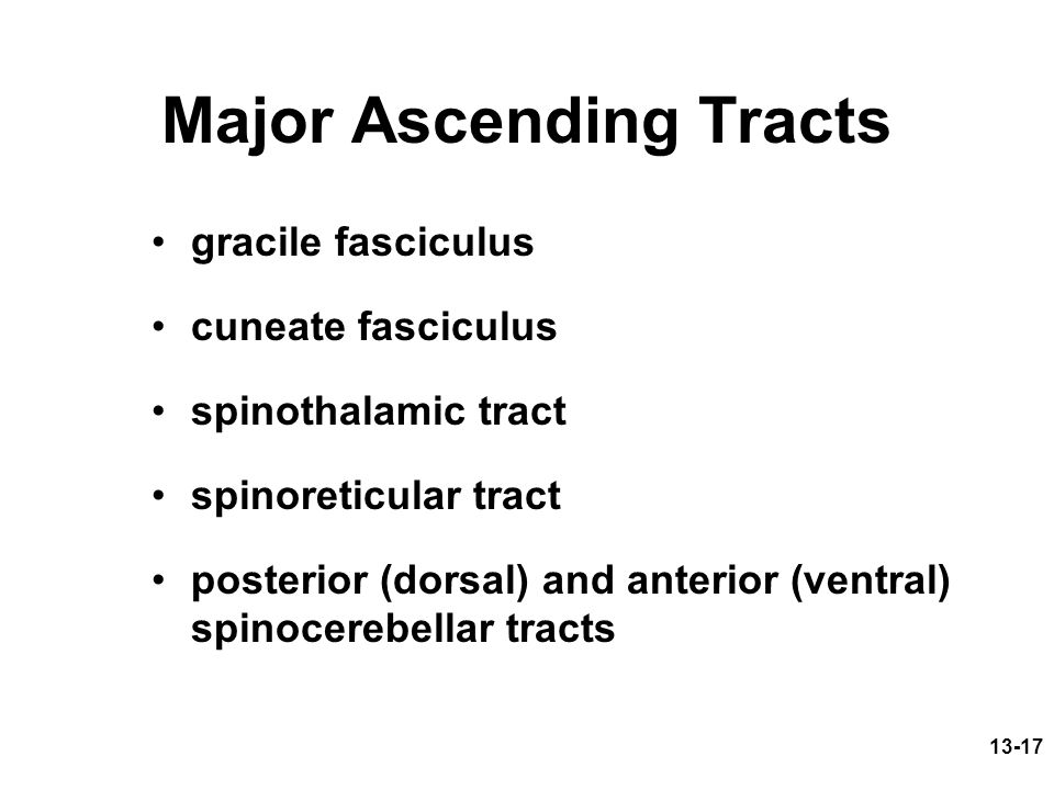 Major Ascending Tracts