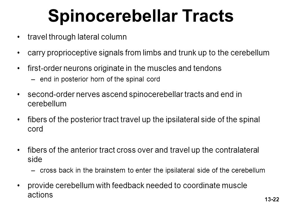 Spinocerebellar Tracts