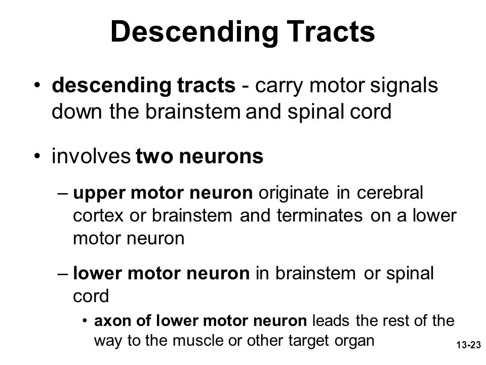 Descending Tracts descending tracts - carry motor signals down the brainstem and spinal cord. involves two neurons.