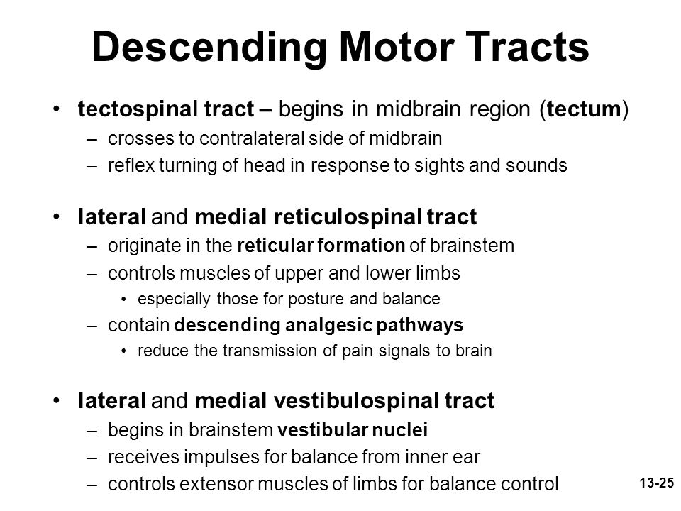 Descending Motor Tracts