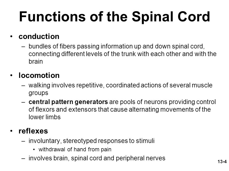 Functions of the Spinal Cord