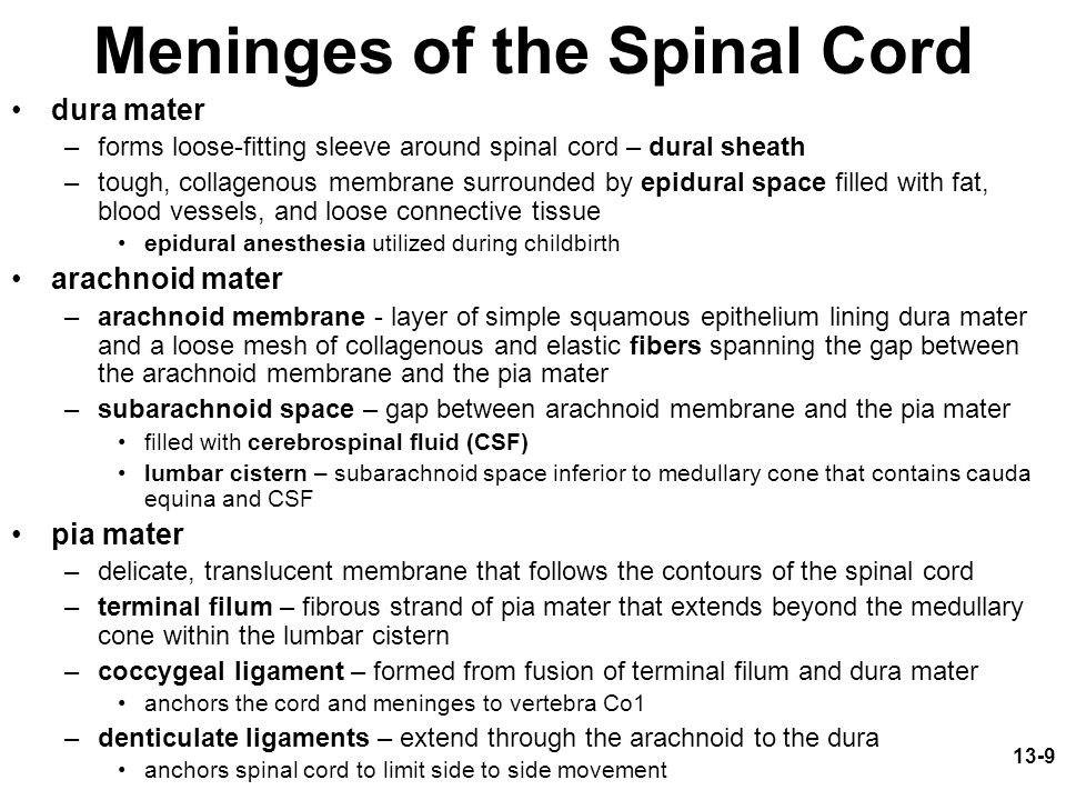 Meninges of the Spinal Cord