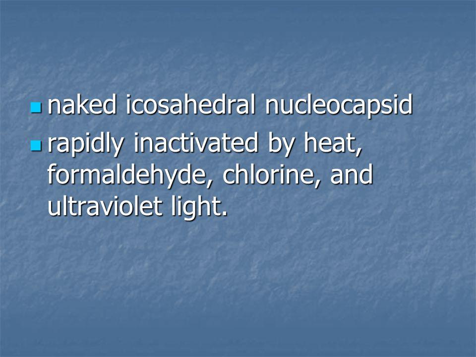 naked icosahedral nucleocapsid