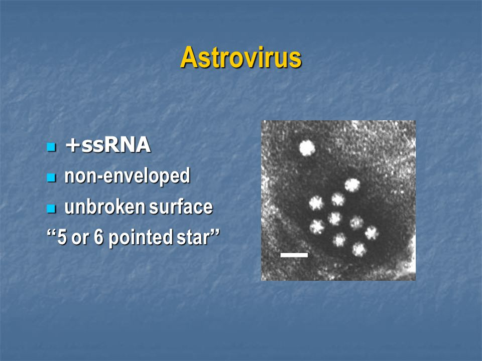 Astrovirus +ssRNA non-enveloped unbroken surface 5 or 6 pointed star