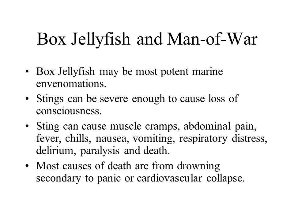 Box Jellyfish and Man-of-War