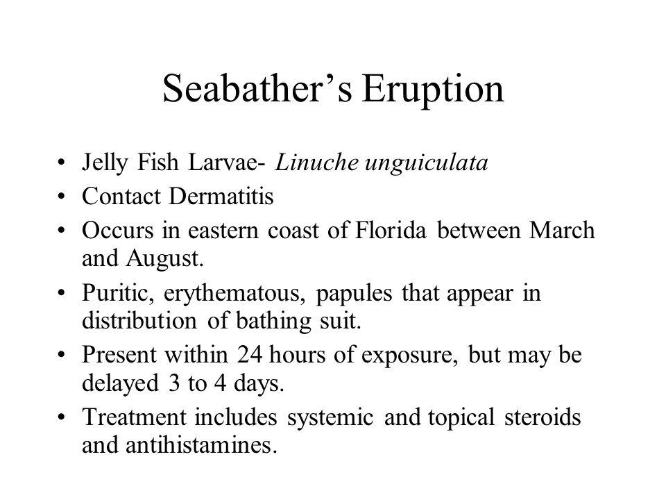 Seabather's Eruption Jelly Fish Larvae- Linuche unguiculata