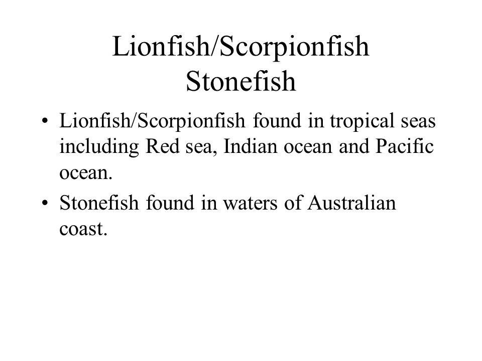 Lionfish/Scorpionfish Stonefish
