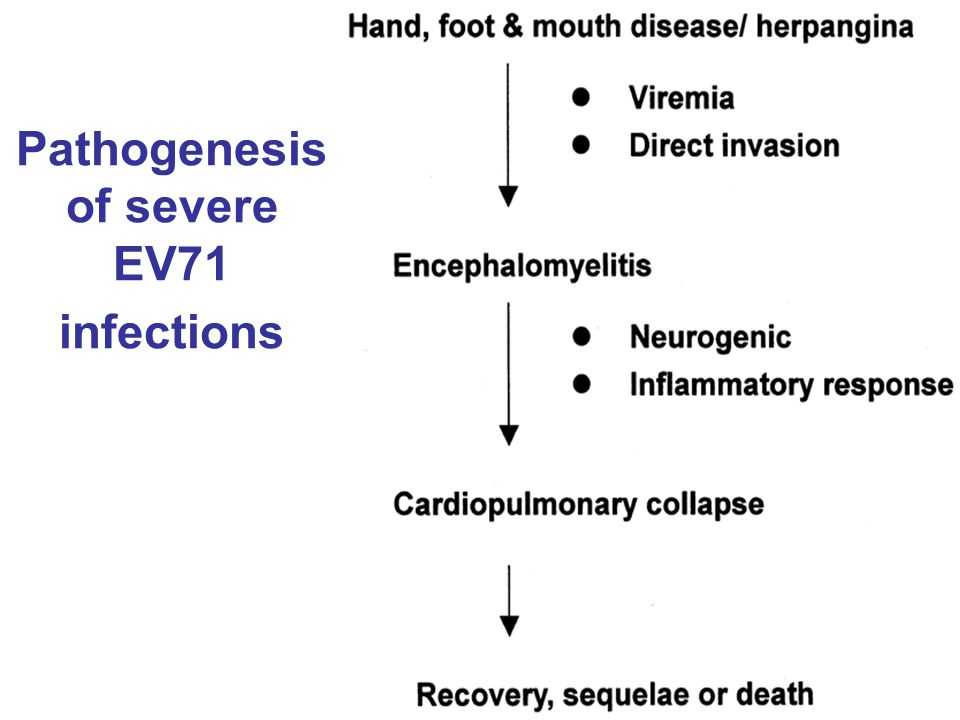 Pathogenesis of severe EV71 infections