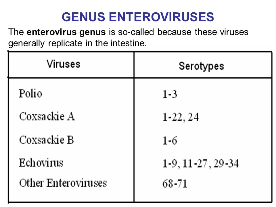 GENUS ENTEROVIRUSES The enterovirus genus is so-called because these viruses generally replicate in the intestine.